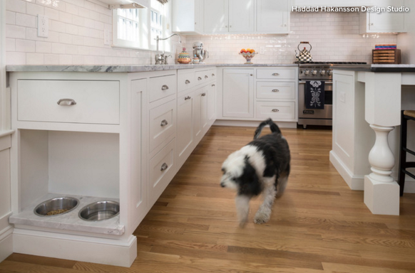 Pet-Friendly Home Designs